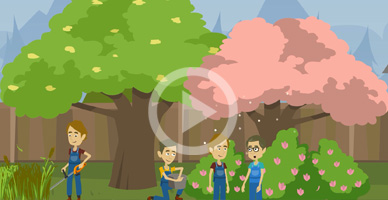 animated video service i